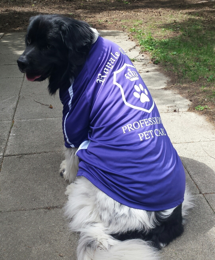 Newfy Griffin Sporting Our New T's! T-Shirt Photo