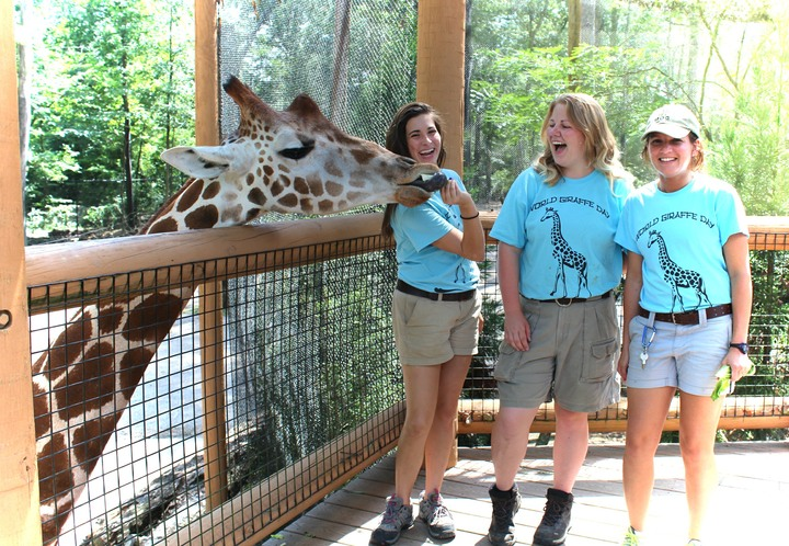 World Giraffe Day T-Shirt Photo