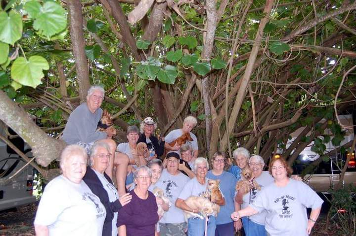 Posse' Girls & Posse' Pups In A Tree  T-Shirt Photo