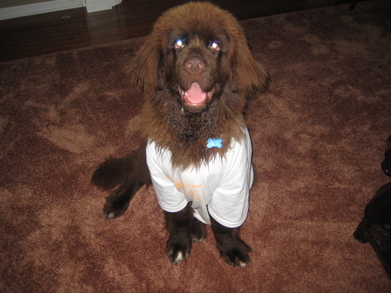Dudley T-Shirt Photo