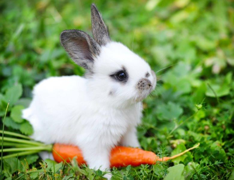 Best Angora Rabbit Food