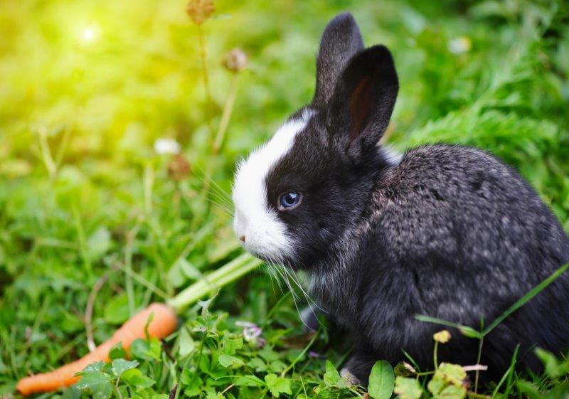 Cute Baby Rabbits – 27 Pics that Will Melt your Heart - Bunnyopia