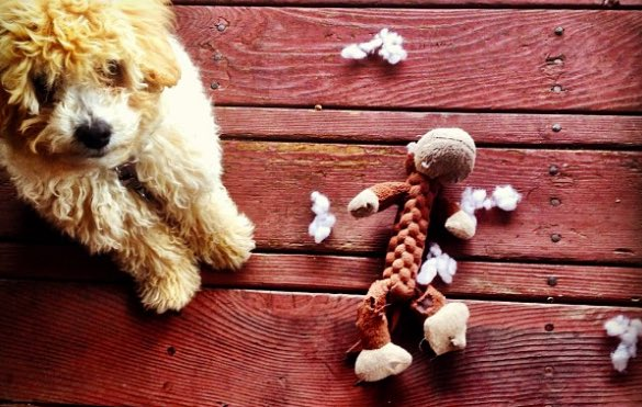 8-most-indestructible-dog-toys-main.jpg