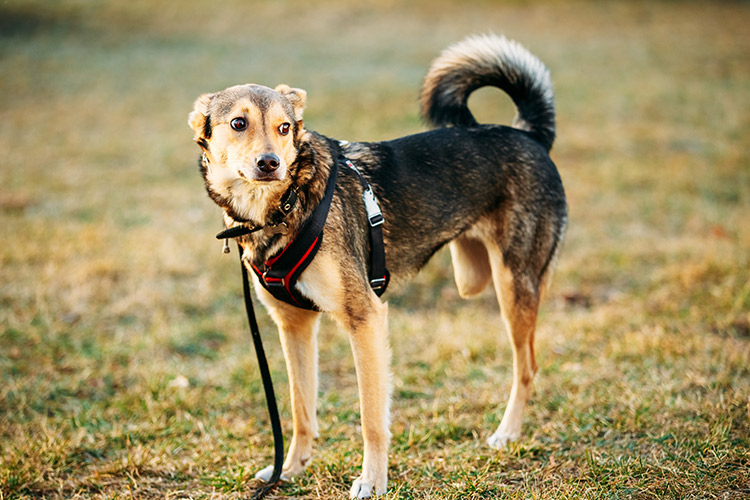 What Is The Significane Of Walks For Dogs