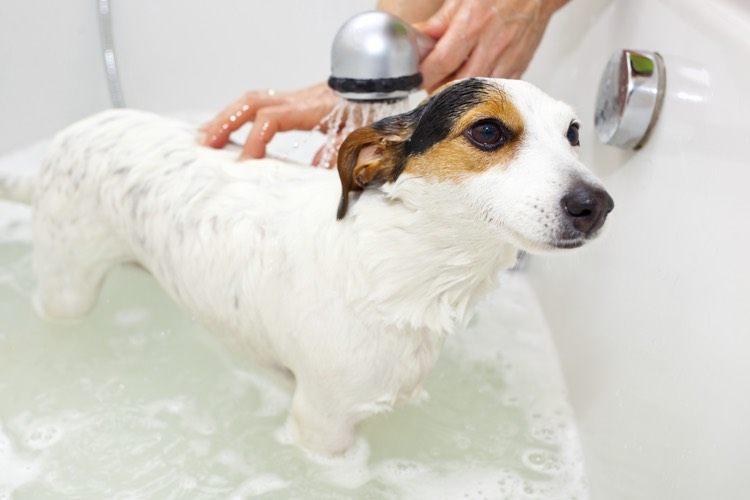 Giving Dog A Bath In Winter
