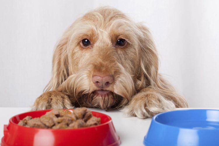 Grain-Free Preservative-Free Dog Food Brands | Cuteness