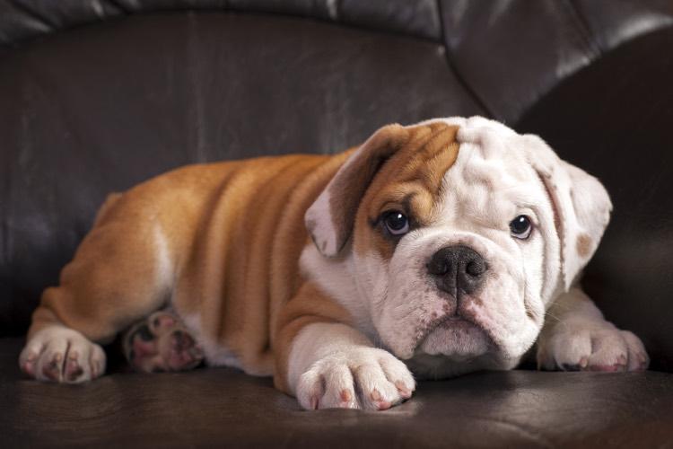 Top Ten Couch Potato Dogs Cuteness