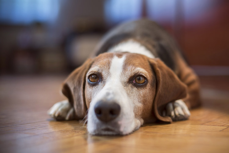 Using Vinegar & Yogurt for Dog Yeast Infections | Cuteness