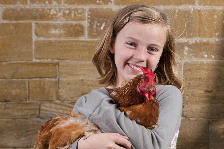 Do Chickens Make Good Pets Animals Mom Com