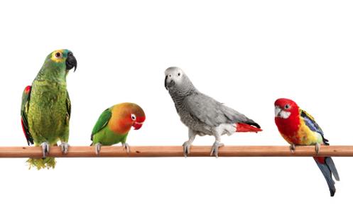 Birds On Perch