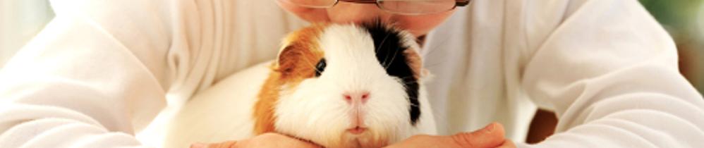 Odontologia para Animais Silvestre e Exóticos - PDI