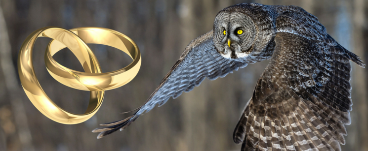 Wedding Descends into Chaos as Owl Ring Bearer Attacks Best Man
