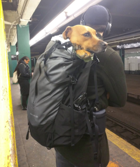 Can Dogs Ride Nyc Subway