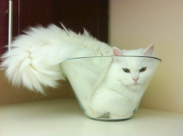 Image result for if it fits it sits cats
