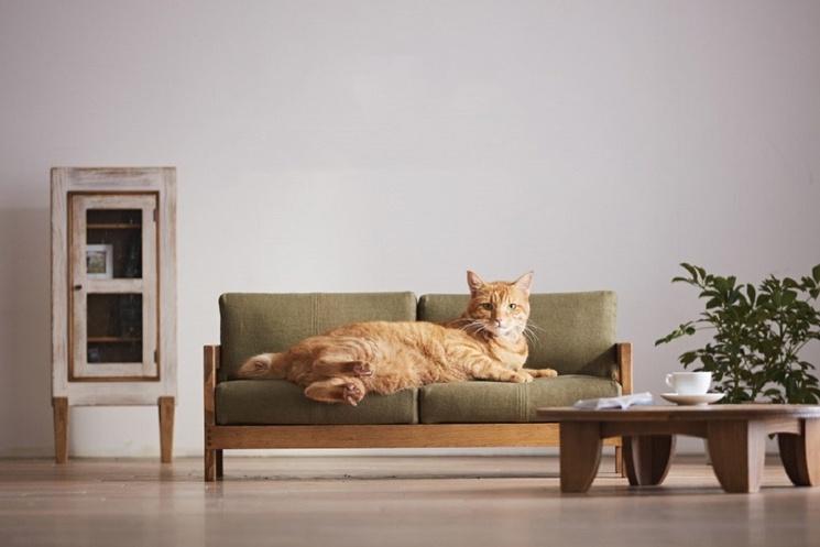 Cat On Okawa Couch