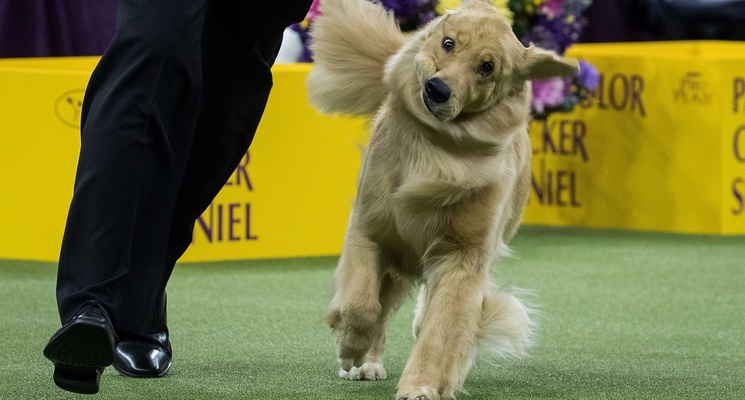 15 Relatable Pups From the Westminster Dog Show