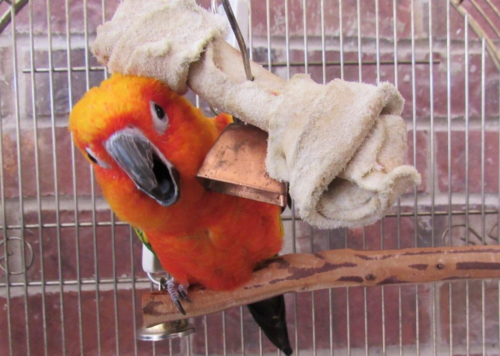 Kiku Monky the bird! With a bone...