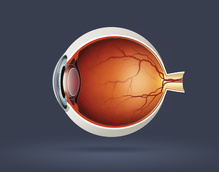 UK Health System Wins the Right to Treat AMD With Bevacizumab