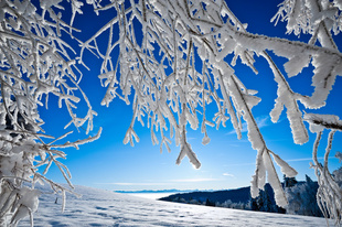 Antimicrobial Resistance in Respiratory Infections Linked to Winter Season