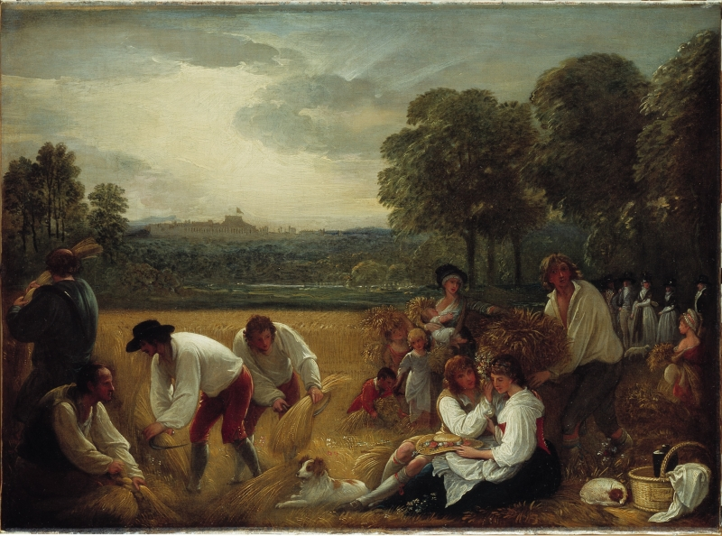 Harvesting at Windsor