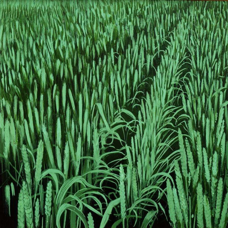 American Grasslands:  Crop #14