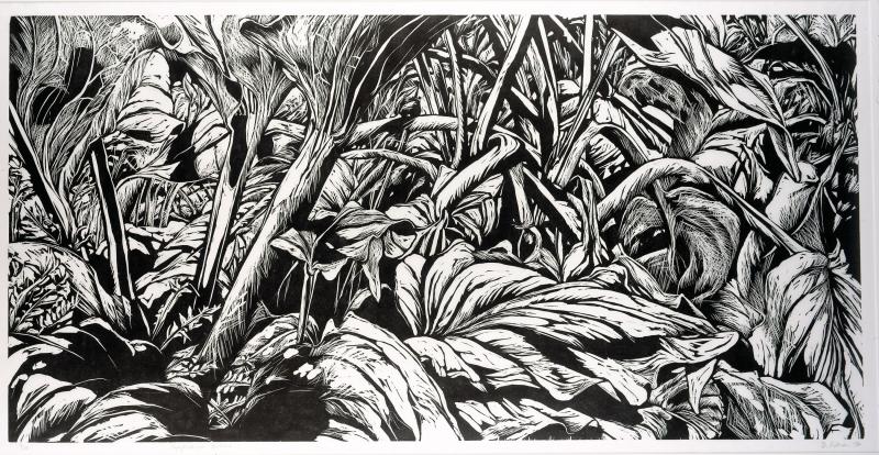 Simplocarpus Foetidus