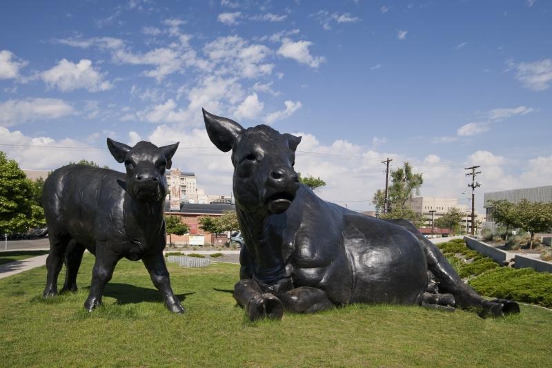 Scottish Angus Cow and Calf