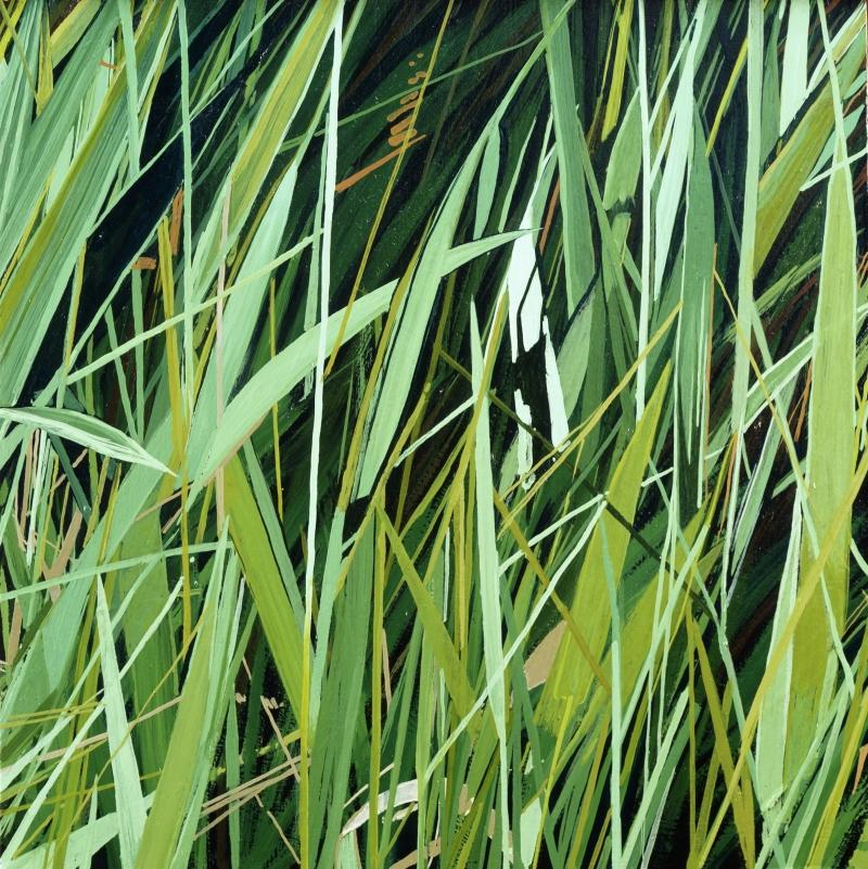 American Grasslands:  Pasture #6