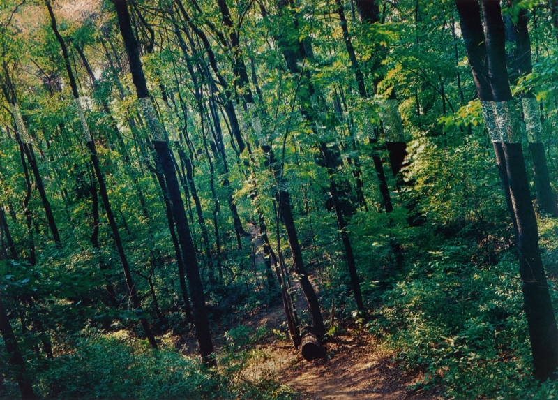 Slanting Forest, Lewiston, New York