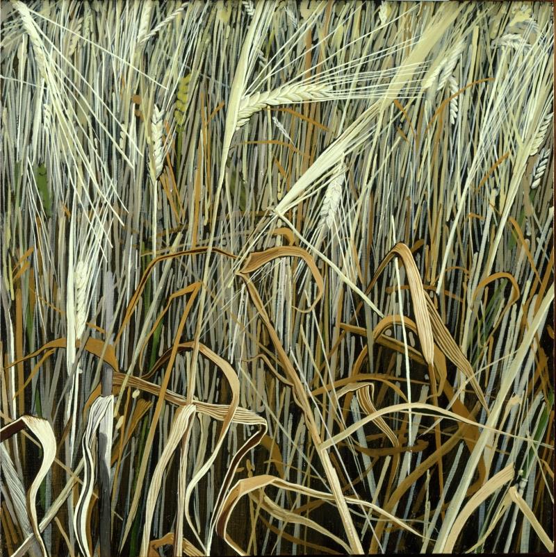 American Grasslands:  Lawn #14