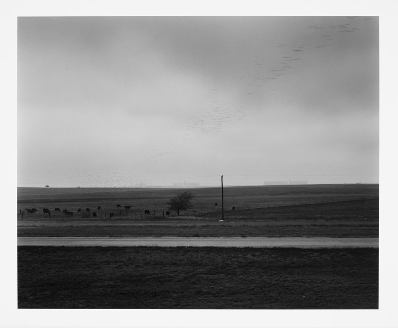 Landscape with birds flying—near Fort Worth, Texas