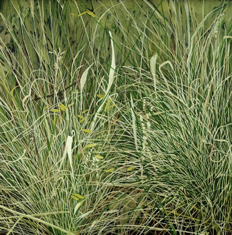 American Grasslands:  Prairie #5
