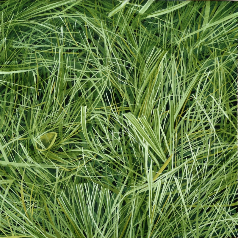 American Grasslands:  Lawn #10