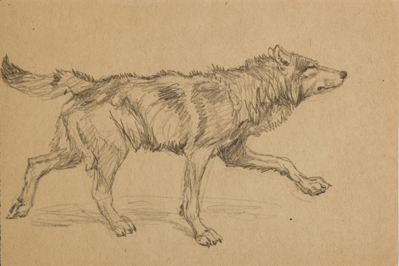 Untitled (Wolf in profile)