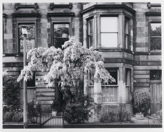 Blooming Tree, Edinburgh