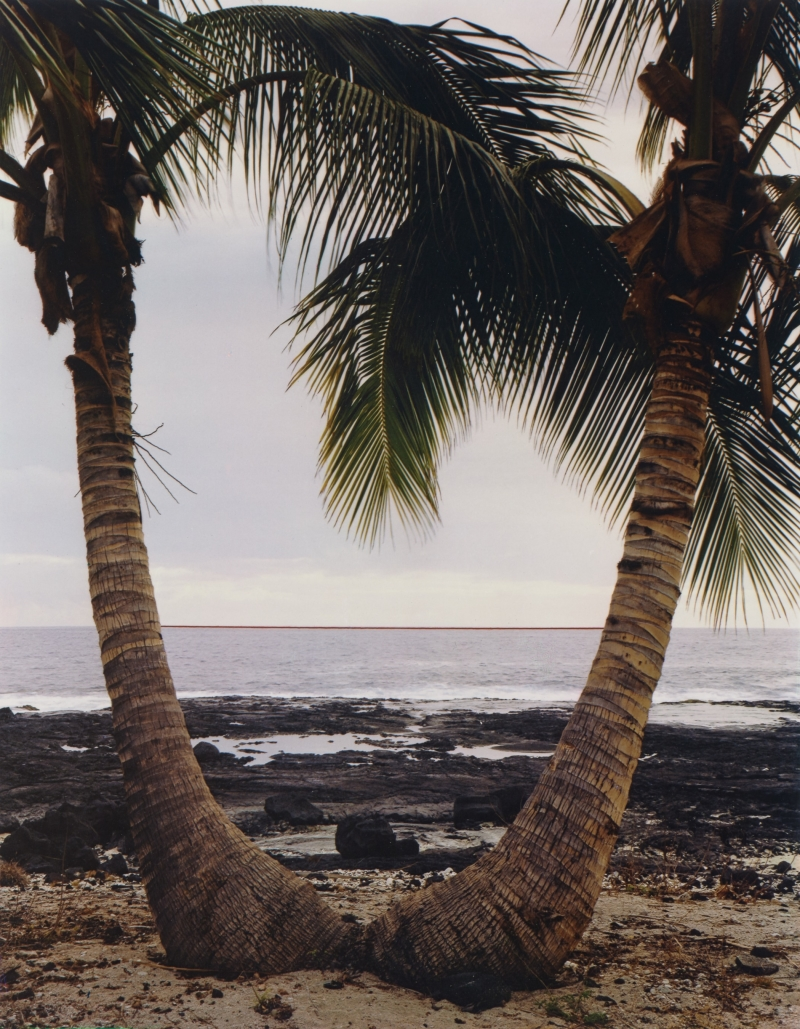 Coconut Palm Horizon, Kona Coast, Hawaii