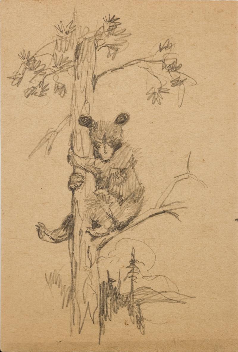 Untitled (Bear cub climbing a tree)