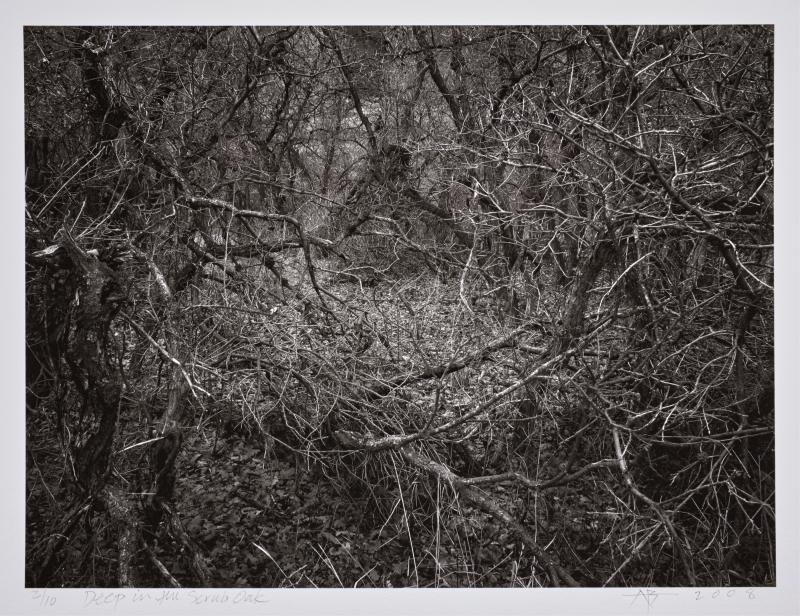 Deep in the Scrub Oak