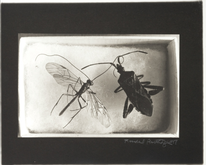 Insects in a Box