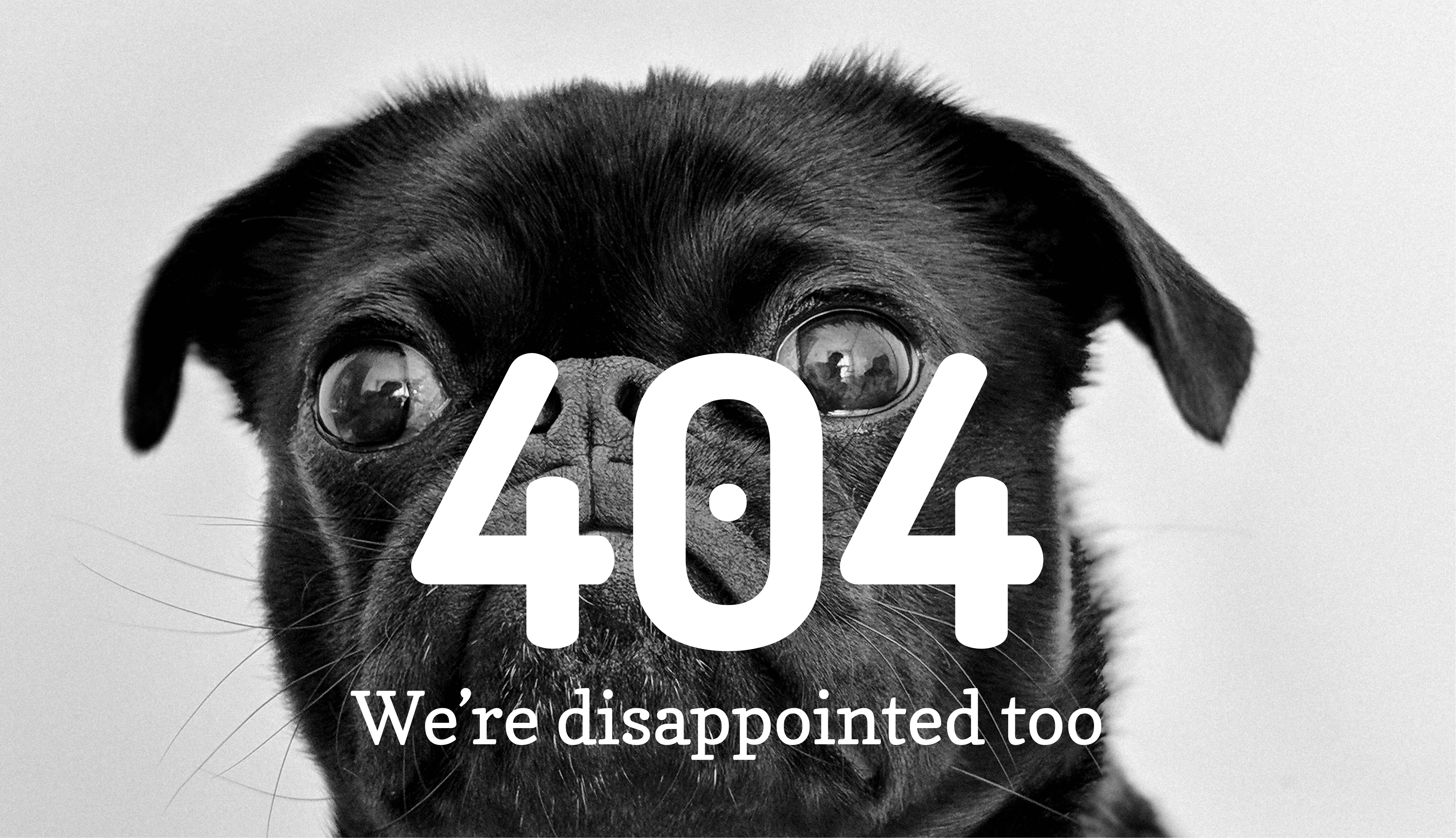 error 404 page not found - image of a sad pug