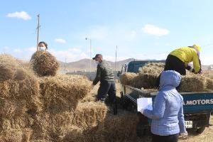 Хонгор сумын 64 малчин өрх 1115 боодол өвс авах хүсэлт гаргажээ