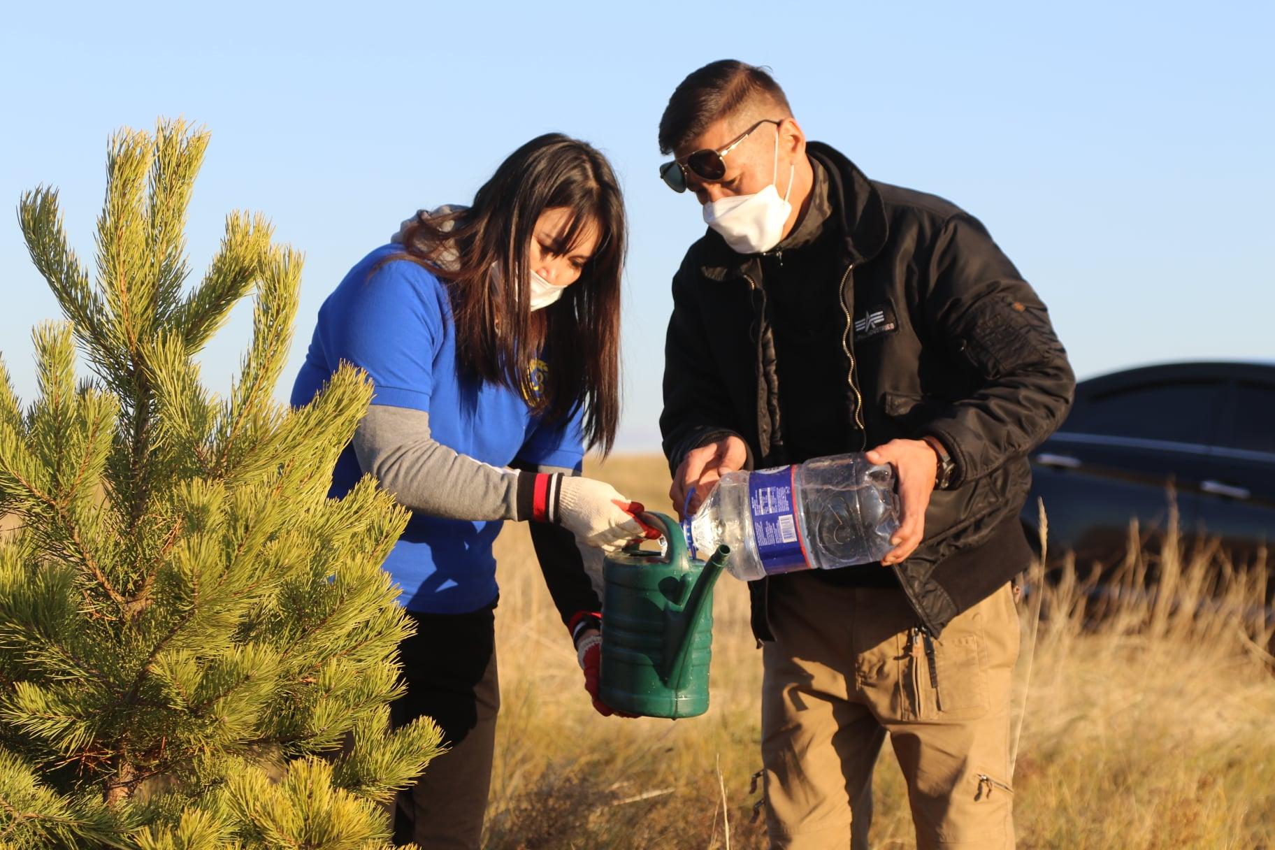 """""""ГАЗАР БУУДАЙ"""" ХХК-ийн хамт олон 2.9 га газарт 765 ширхэг агч, нарс мод тарилаа"""