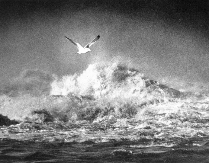 A seagull surveys the rapids at Conawingo when the flood gales are opened in March of 1972. (William L. LaForce, Jr./Baltimore Sun)
