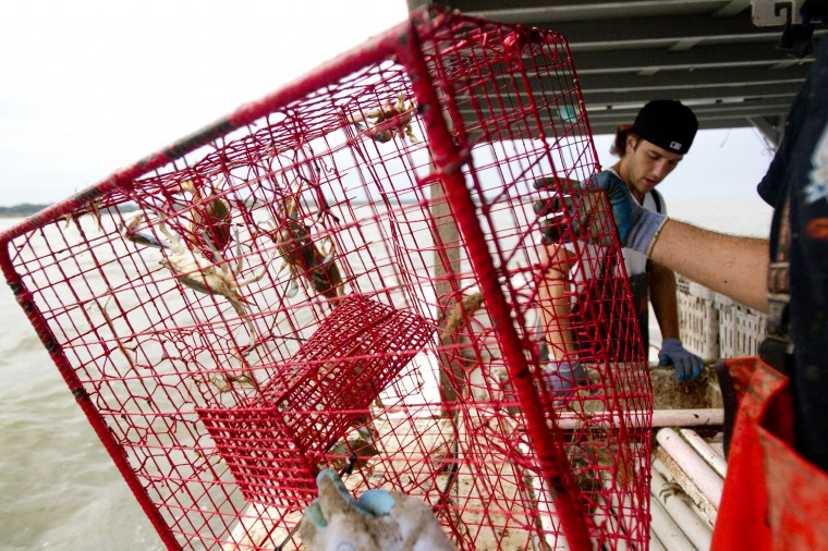 Deckhand Tommy Davis, 25, of Kingsville pulls in a crab pot while crabbing on Tony Conrad's boat. (Jen Rynda/BSMG)