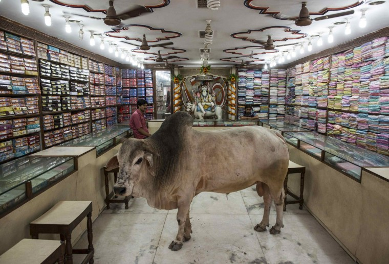 A bull stands inside a shop selling clothes at Varanasi, in the northern Indian state of Uttar Pradesh, June 20, 2014. Picture taken June 20, 2014. (Danish Siddiqui/Reuters)