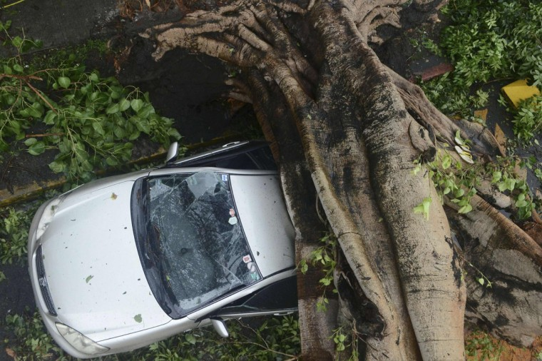 A huge tree crushes a car during the onslaught of Typhoon Rammasun, (locally named Glenda) that hit Makati city in Manila. The typhoon killed at least 10 people as it churned across the Philippines and shut down the capital, cutting power and prompting the evacuation of almost more than 370,000 people, rescue officials said on Wednesday. (Mark DeMayo/Reuters)