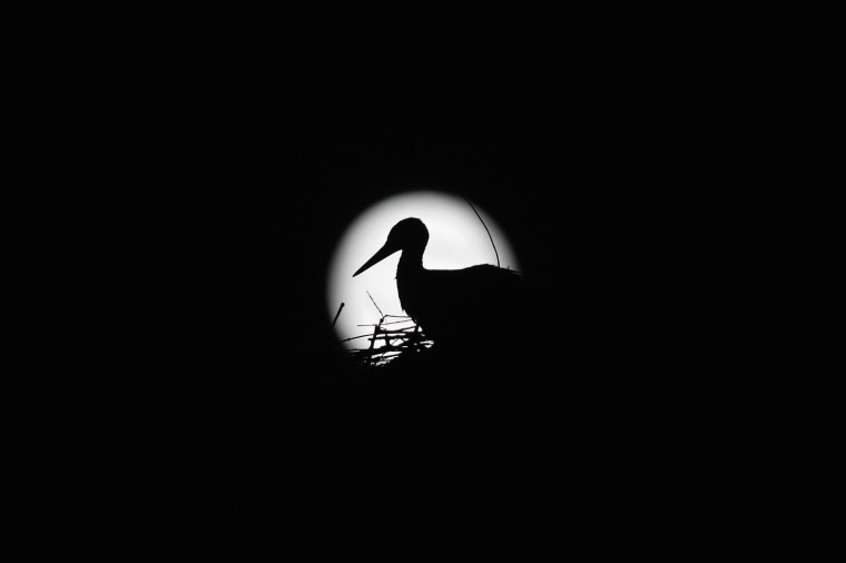 A stork is silhouetted against the Supermoon in its nest in downtown Arriate, in the southern Spanish province of Malaga early July 13, 2014. Occurring when a full moon or new moon coincides with the closest approach the moon makes to the Earth, the Supermoon results in a larger-than-usual appearance of the lunar disk. REUTERS/Jon Nazca