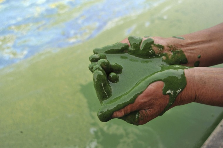 A fisherman fills his cupped palms with water from the algae-filled Chaohu Lake in Hefei, Anhui province, June 16, 2009. (REUTERS/Stringer)