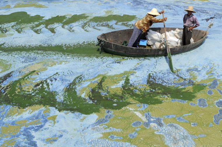 Fishermen row a boat in the algae-filled Chaohu Lake in Hefei, Anhui province, on June 19, 2009. The country has invested 51 billion yuan ($7.4 billion) towards the construction of 2,712 projects for the treatment of eight rivers and lakes including Huaihe River, Haihe River, Liaohe River, Chaohu Lake, Dianchi Lake, Songhua River, the Three Gorges region of the Yangtze River and its upstream area, Xinhua News Agency reported. (REUTERS/Jianan Yu)