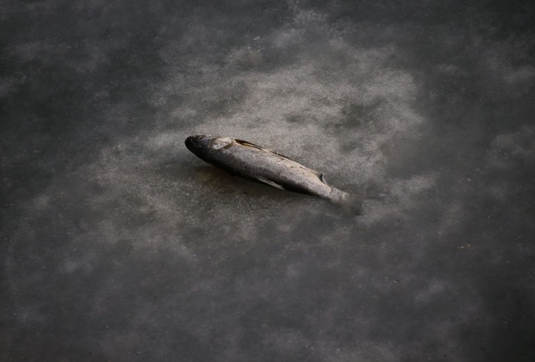 "A fish whose tail is stuck in a partially frozen fish farm is seen near an abandoned steel mill of Qingquan Steel Group in Qianying township, Hebei province February 18, 2014. There are dozens of ""zombie"" mills that can no longer afford to operate in and around Tangshan, an industrial city of 7 million people in China's northern Hebei province. (REUTERS/Petar Kujundzic)"